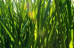 photos.demandstudios.com_80_235_fotolia_3841831_XS
